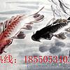 老字画鉴定交流18550534034