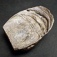 中国古钱 马蹄银 银锭 刻印 船形银